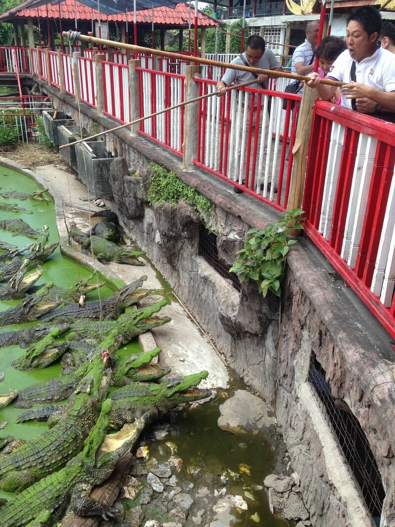 A Bangkok Zoo Where People Ask for and Escape Death by Crocodile - Atlas Obscura
