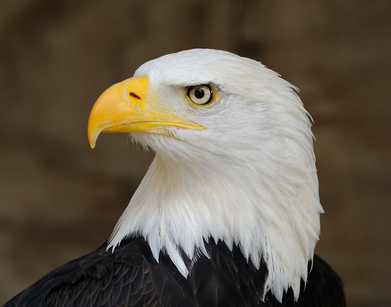 A very, very majestic-looking national symbol.