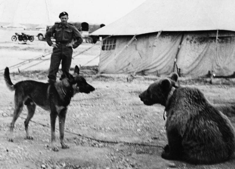 Wojtek, a new recruit, gets eyed by an army dog in 1942. (Photo: Imperial War Museum/Public Domain)