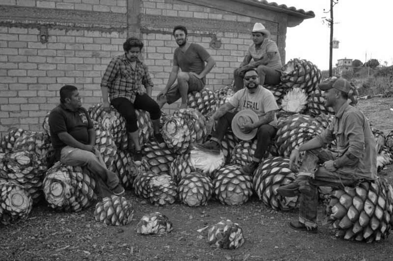 Mezcal is made from the hearts of the agave plant, which are roasted in clay ovens for days before fermentation and distilling.