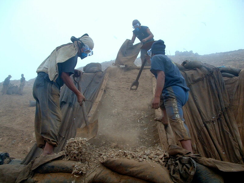 Modern-day guano miners in Peru. Guano is on the upswing again, this time as a natural alternative to artificial fertilizer.