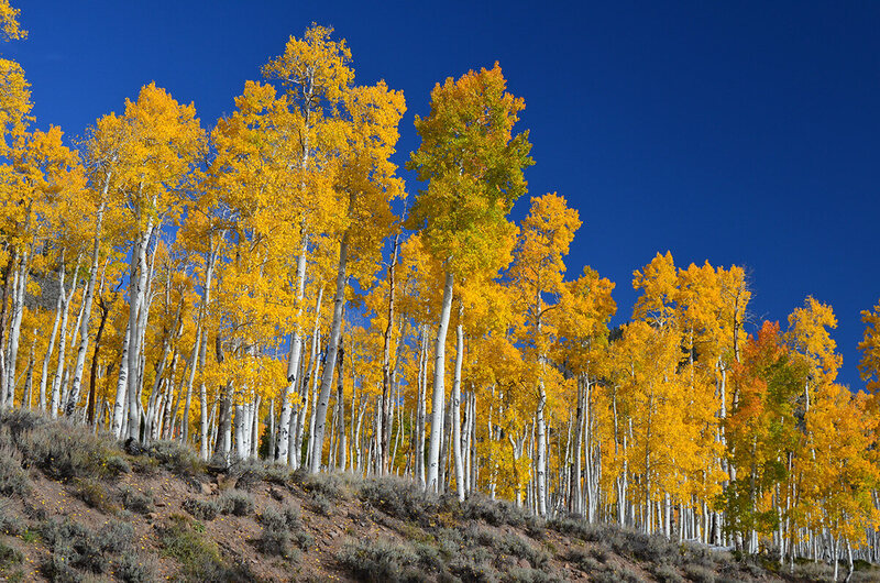A small slice of Pando looks over Utah.