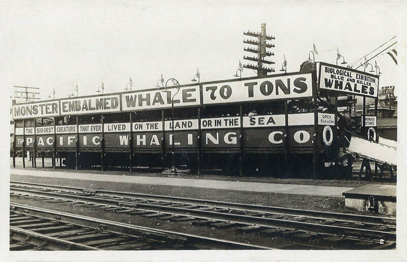 Monster Embalmed Whale show of the Pacific Whaling Company, date unknown