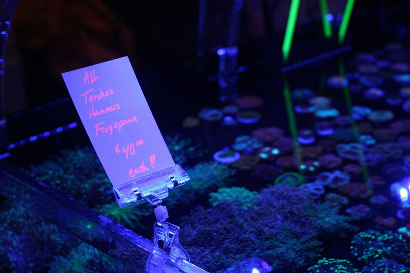 Fraggers use blacklights to draw attention to healthy corals—and hot deals.