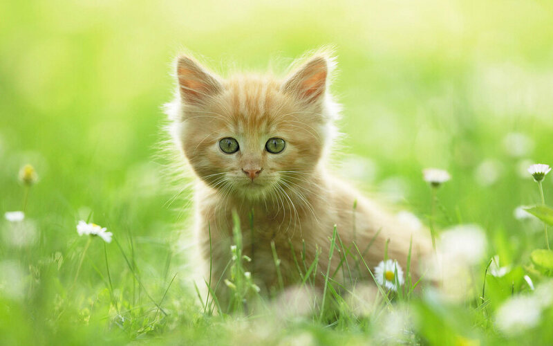Can 'Cute Aggression' Inspire Actual Violence?