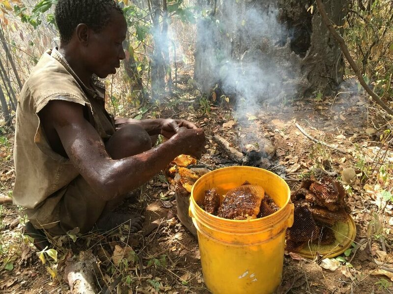A Hadza man gathers up his honey harvest, and burns the surplus.