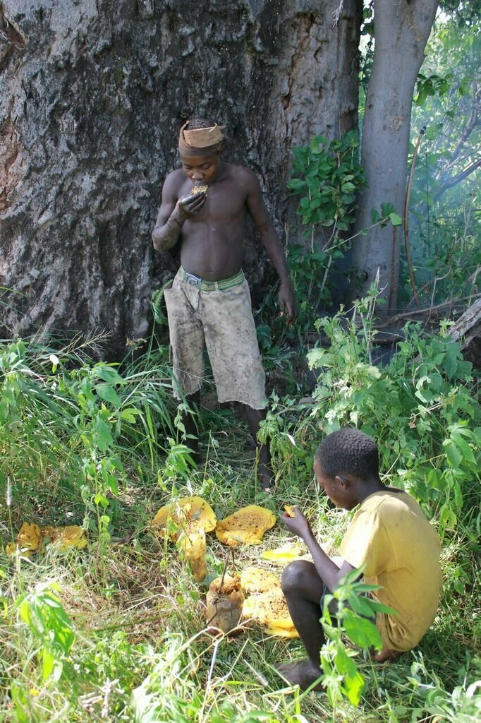 Two Hadza boys share a bumper honey harvest.
