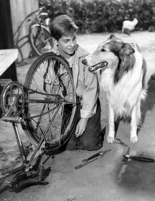 A 1956 photo of Lassie, prolific PATSY Award winner (Source: Wikimedia Commons/Public Domain)