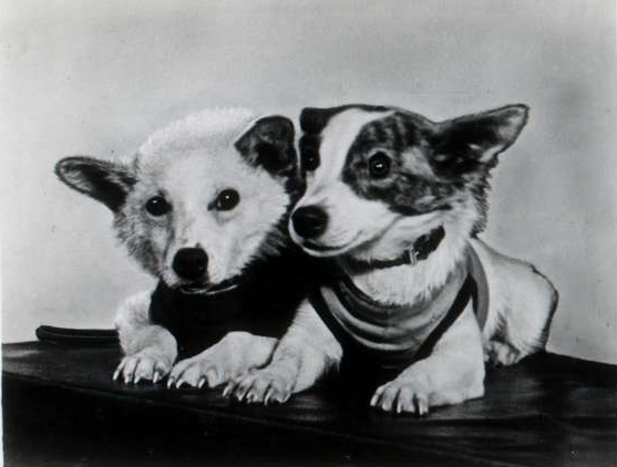 Belka and Strelka the Soviet Space Dogs