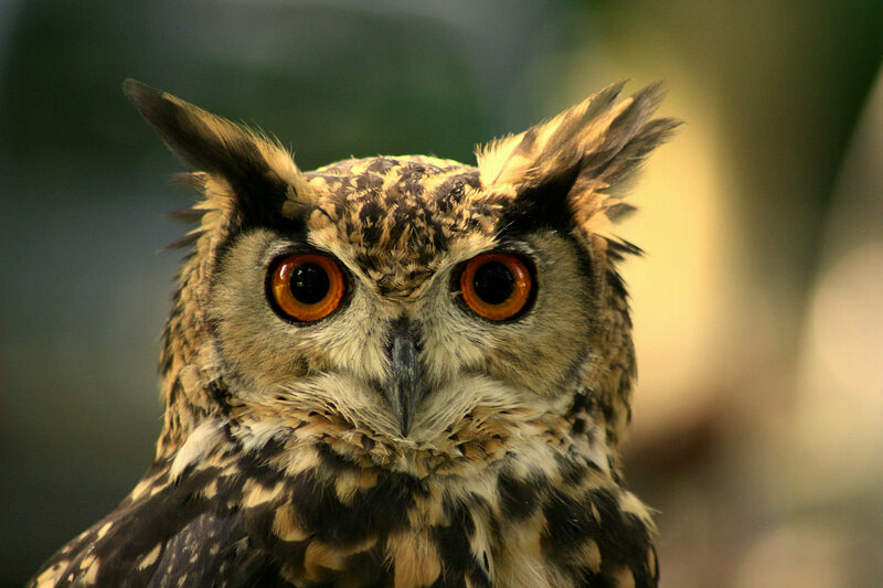 Is this owl a who or a that?