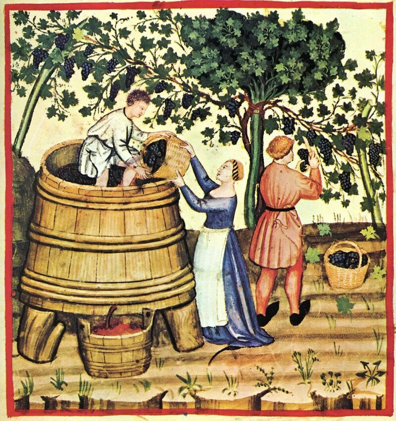 French wine-making.