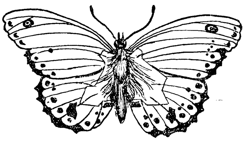 This illustration of a butterfly contains a secret map