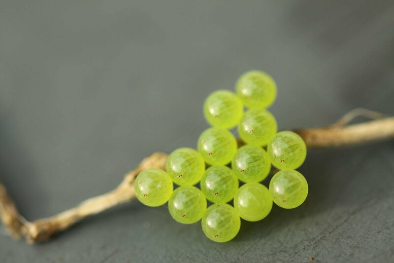 The Blobby Dazzling World Of Insect Eggs Atlas Obscura