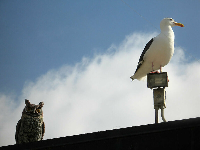 A seagull, unimpressed with human ingenuity.