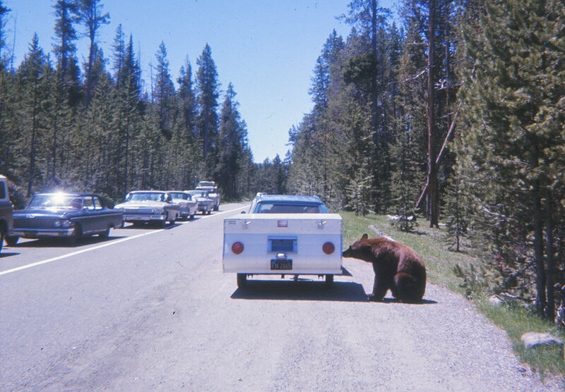 A Yellowstone bear sniffs at a trailer in 1967.