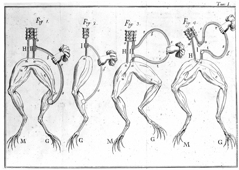 It all started with a little frog muscle experiment, one that anatomy students still conduct in labs today.