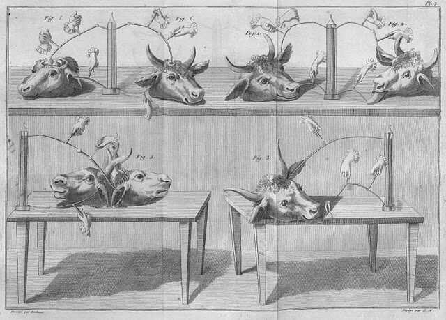 Scientists like Aldini would put on shows, electrifying cow heads and making their tongues writhe and twitch.