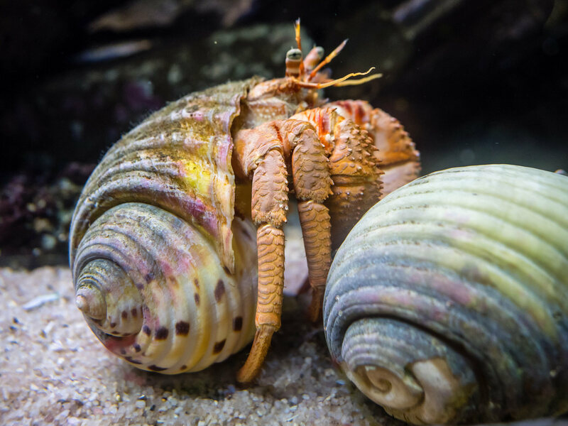 Image result for hermit crabs