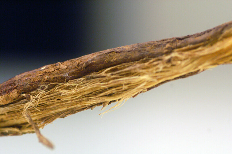 Some advised men to carry licorice root as a safety precaution.