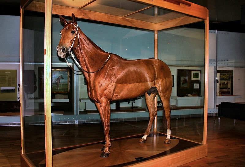 Champion race horse Phar Lap, now mounted and on display at the Melbourne Museum, Australia.