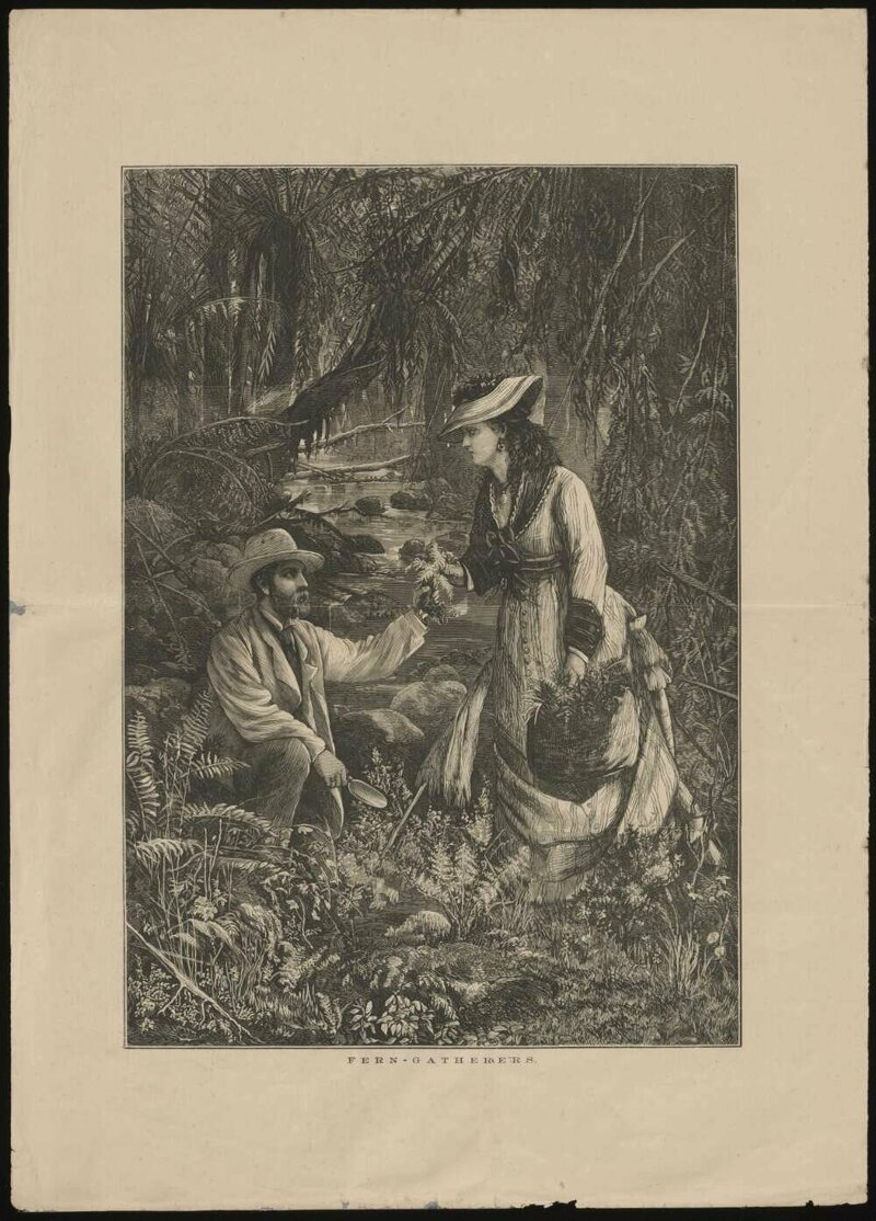 A 19th century depiction of fern gatherers.