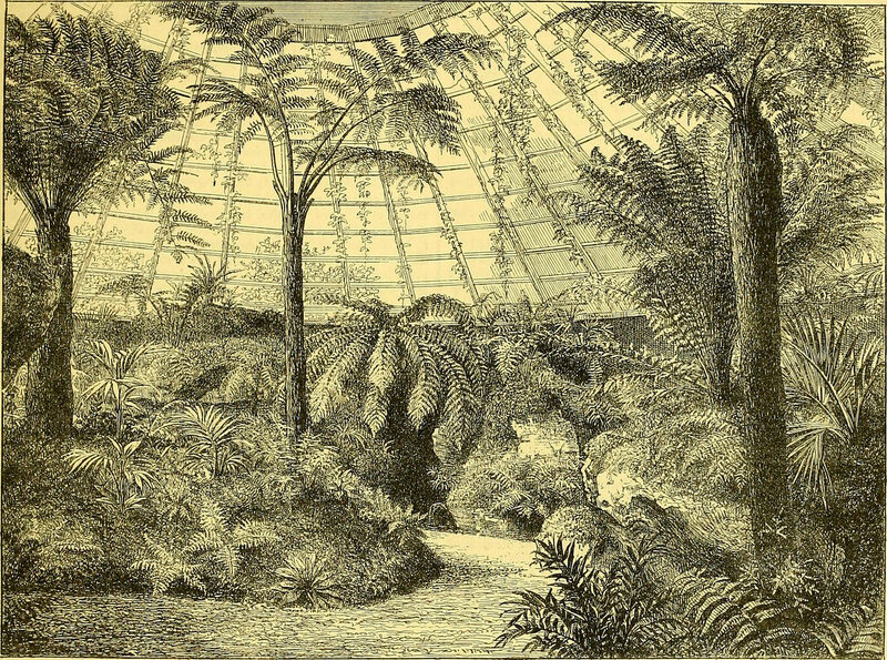 A depiction of a 19th-century British fernery, containing ferns from around the world.