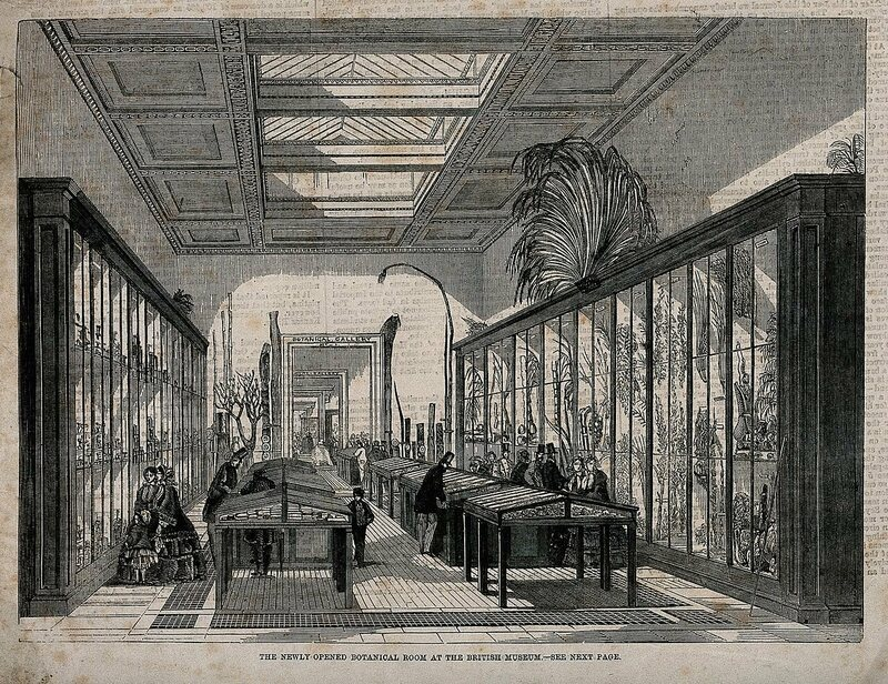 A giant fern overlooks the British Museum's Botanical Room, 1858.