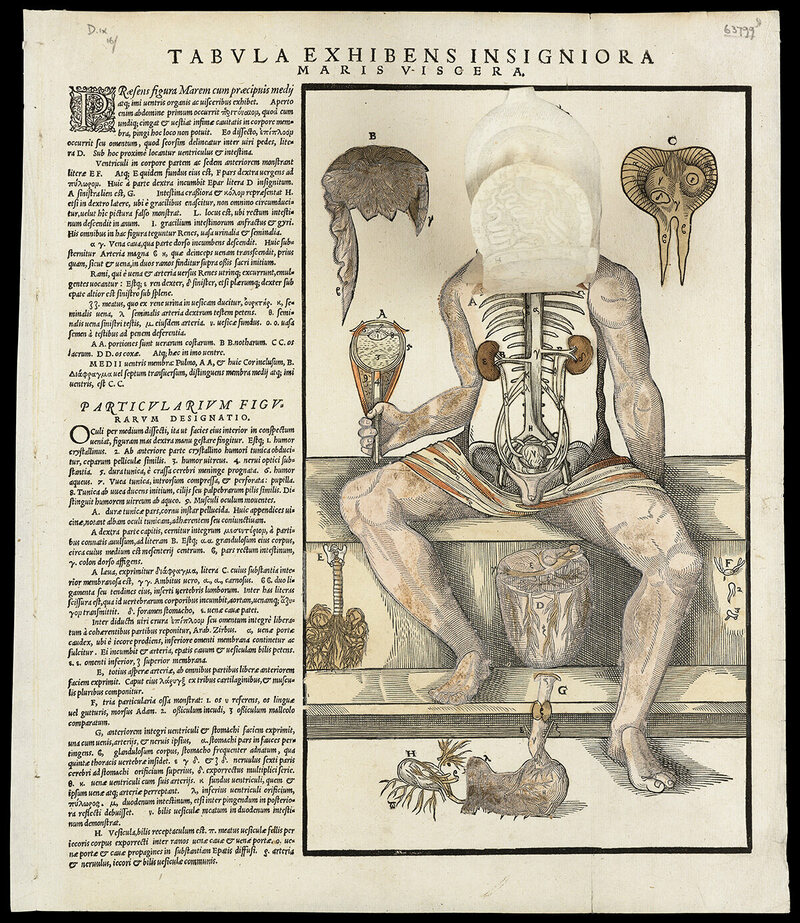 Anatomical fugitive sheets of a skeleton, male figure and a female figure, 1573.