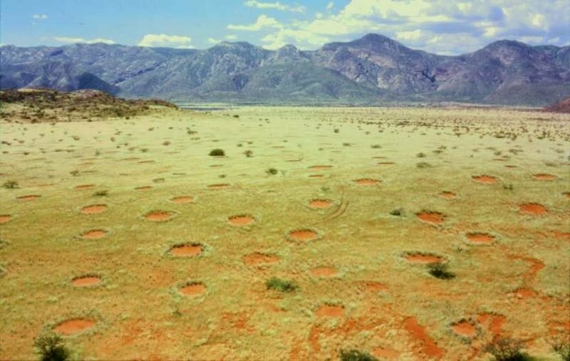 Namibian fairy circles seems mysterious when seen from above.