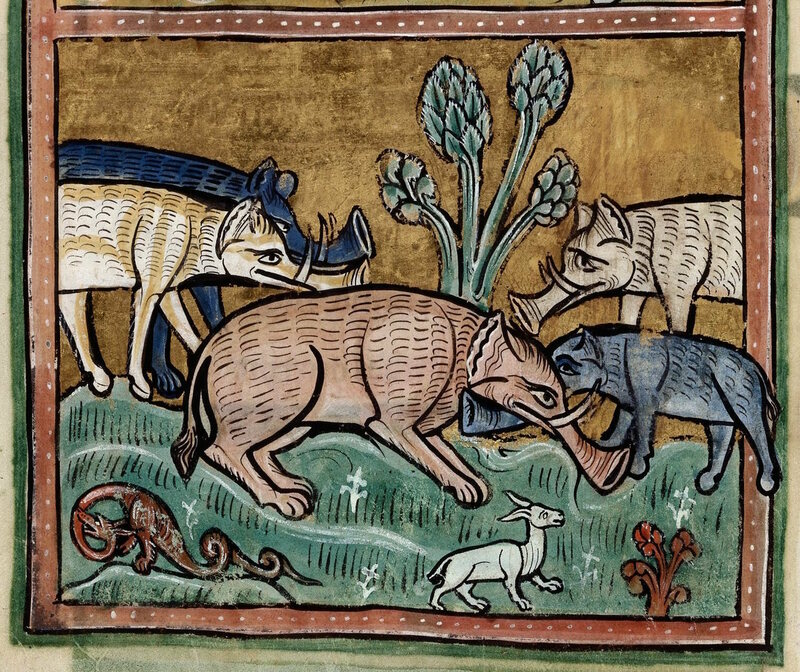 Elephants in a 13th century manuscript.