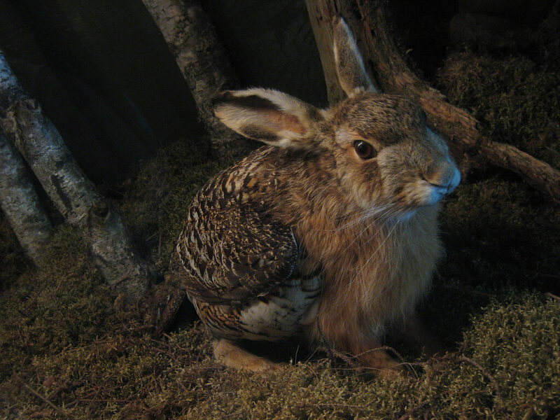 The skvader, a rabbit with the wings of a grouse.