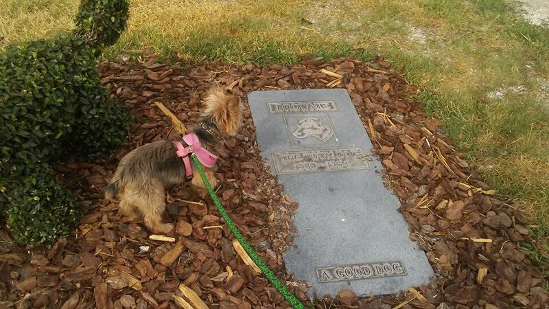 Brownie's Grave. A good dog.