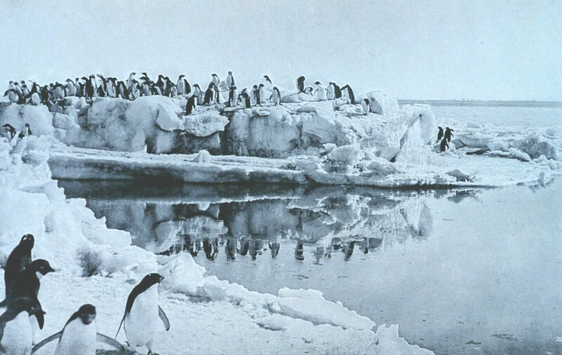 Adelie penguins, photographed by George Murray Levick in 1911.