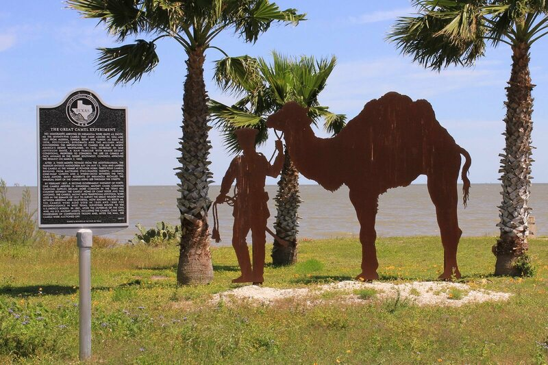 A historical marker for the U.S. Camel Corps, in Indianola, Texas.