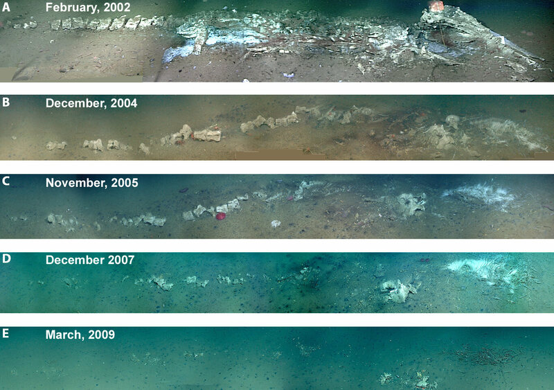 A photomontage showing the decomposition of a 3,000-meter-deep whale carcass in Monterey Canyon over a seven-year period.