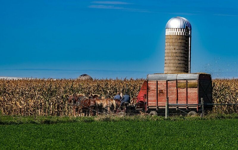 An Amish farm in Indiana.