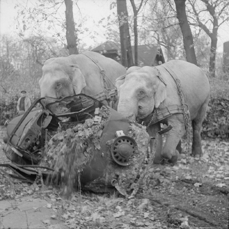 Circus elephants Kiri and Many move a wrecked car from a bombed-out garage in Hamburg.