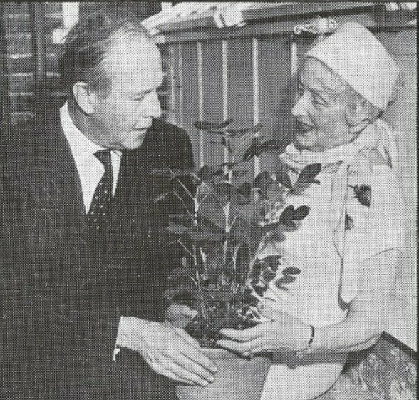 Former Atomic Gardening Society President Muriel Howorth shows Beverly Nichols a two-foot-high peanut plant grown from an irradiated nut.