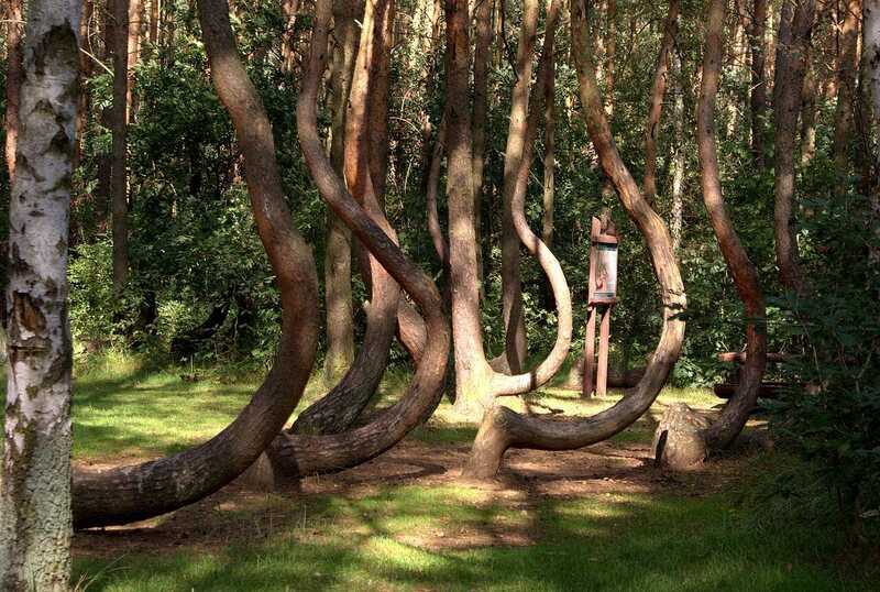 The Crooked Forest.
