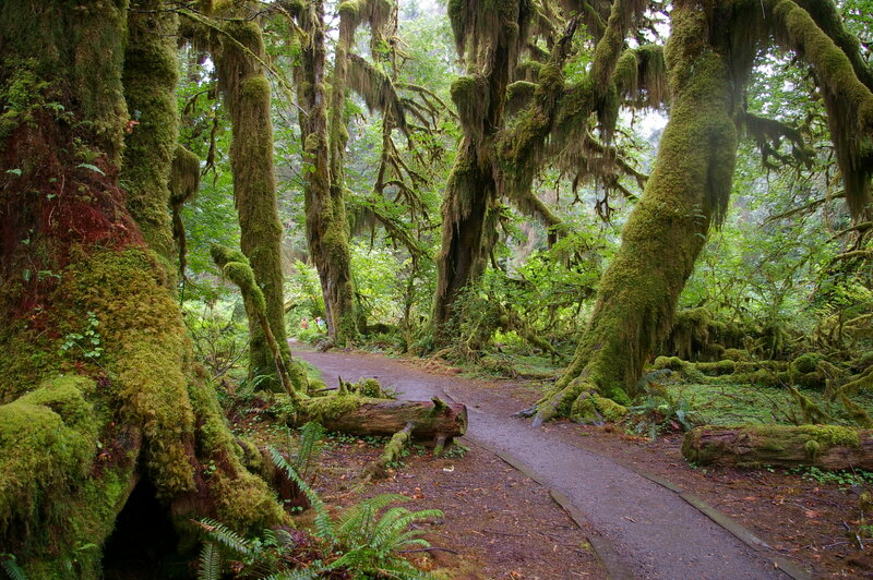 Hall of Mosses.