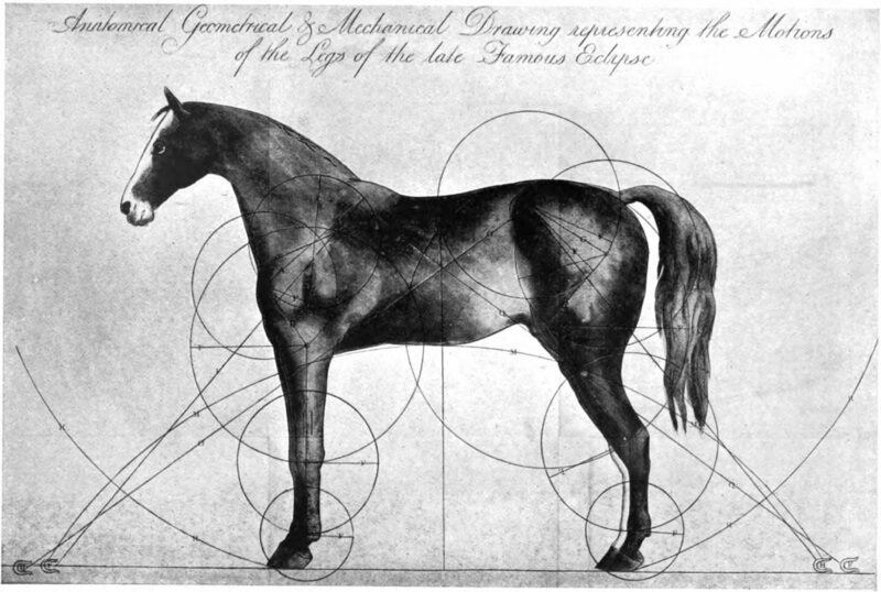 A 19th-century anatomical study of Eclipse attempts to show what made him so powerful.