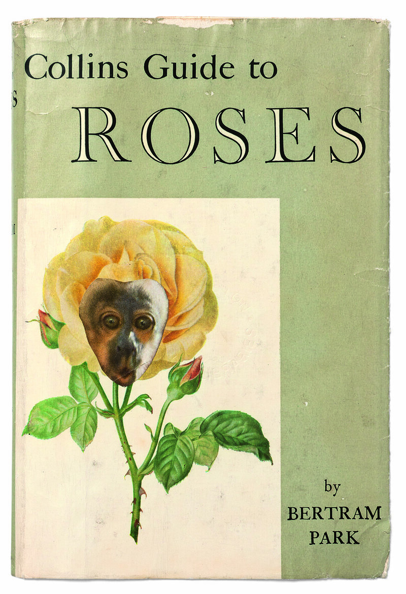 <em>Collins Guide to Roses</em>.