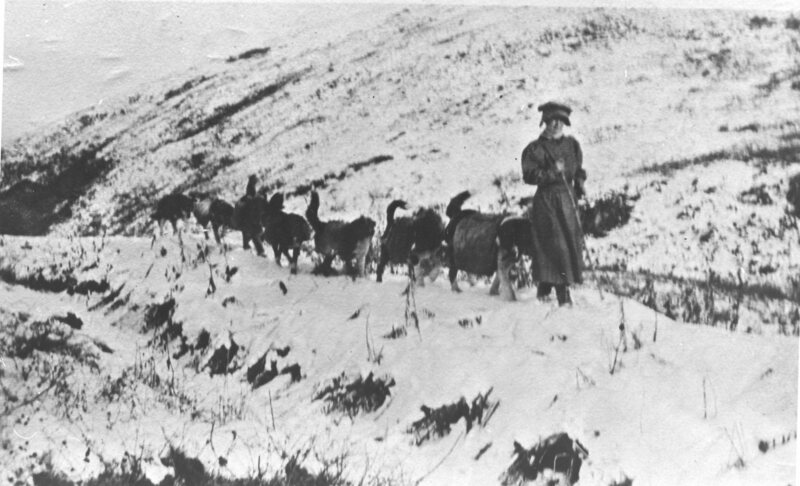 Fannie Quigley leading pack dogs.