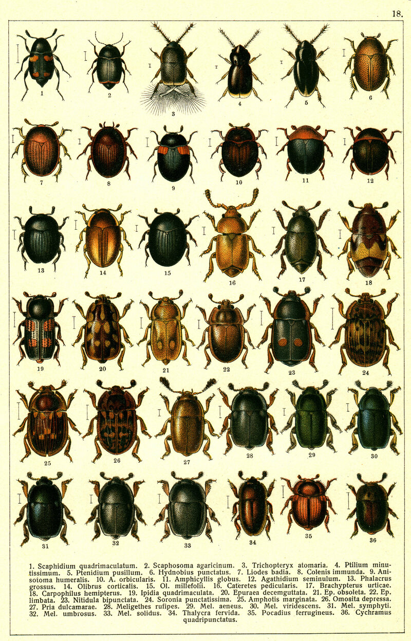 Attempts to pick <em>Amphotis marginata</em> out of a line-up may be difficult. (Hint: Take a close look at number 25.)