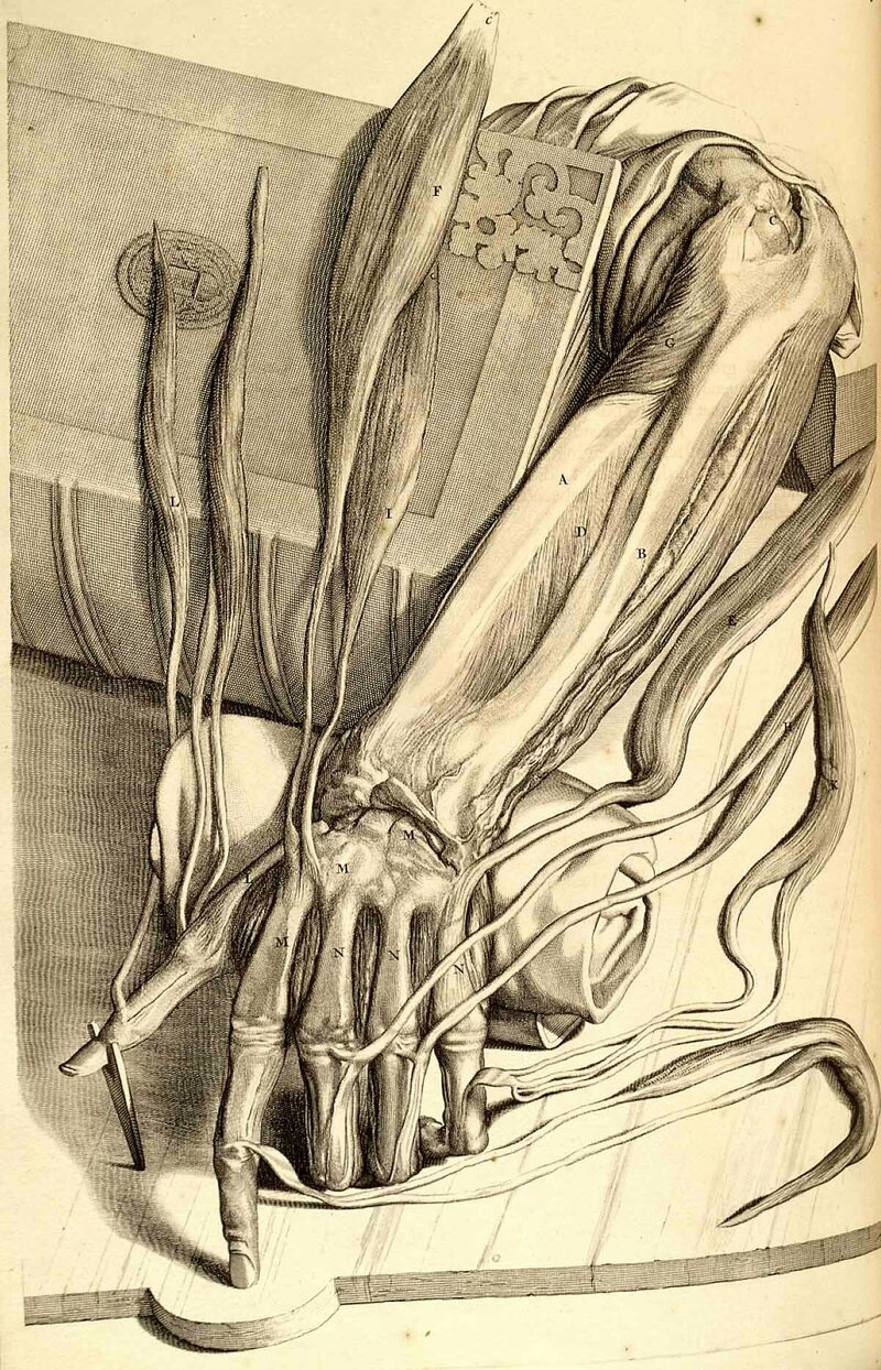 Bidloo's illustrations include gory details.