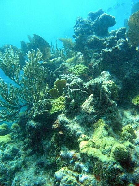 A reef in the Florida Keys today.