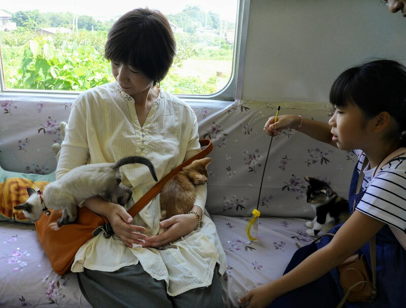 Three kittens clamber over a cat train passenger.