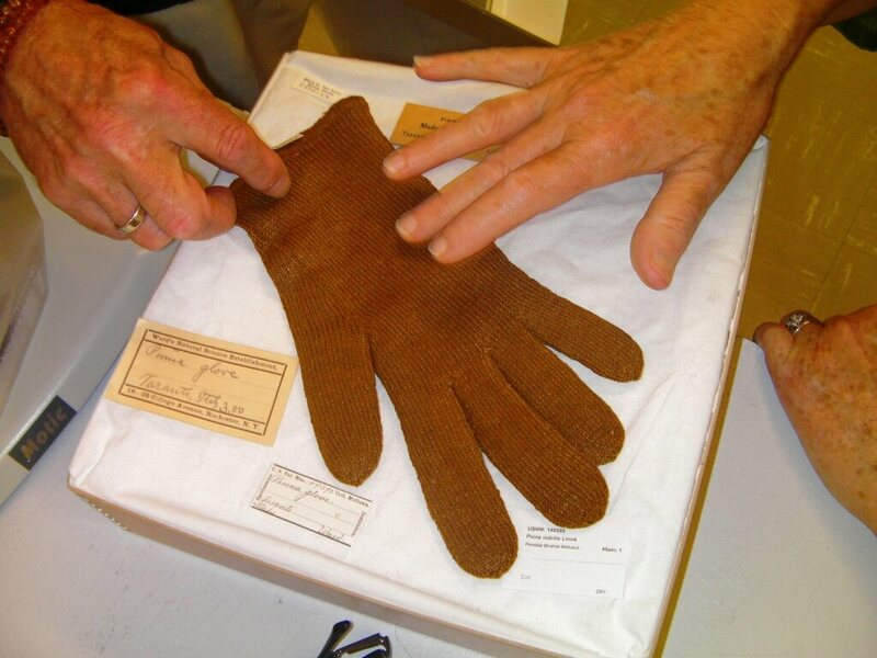 This glove, likely dating from the late 1800s, was woven from a mixture of wool and sea silk. It is currently in the collection of the Smithsonian.