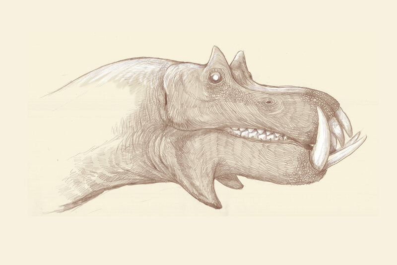 If you tried to envision a hippo based only on its bones, it might look something like this.