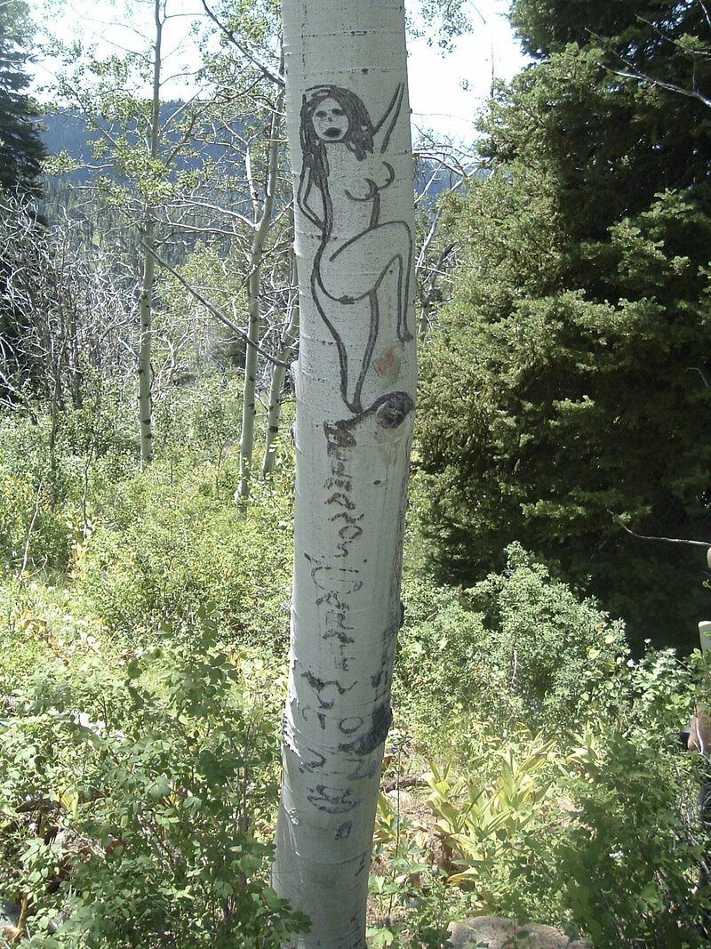 The mysterious tree carvings of america s basque
